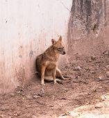 Spotted Sitting Hyena (hyaenidae) Scavenger In Chhatbir Zoo, India poster