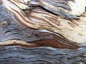 Paperbark Tree Patterns 2
