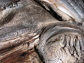 Macro Tree Stump Background
