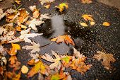 Close Up Of Wet Autumn Leaves. Floor Of Stones Wet From The Rain And Autumn Leaves. poster