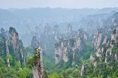 Famous tourist attraction of China - Zhangjiajie stone pillars cliff mountains in fog clouds at Wuli poster
