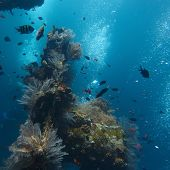 picture of bottomless  - Underwater shoot of part of shipwreck and corals on it surface - JPG