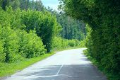 Asphalt Road And Green Roadsides With Bushes. Empty Highway. Overgrown Highway. Road With Dense Vege poster