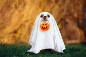 Dog In A Ghost Costume Holding A Pumpkin For Halloween poster