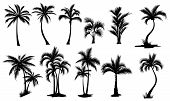 Set Of Palm Trees. Collection Of Silhouette Of Palm Tree. The Contours Of Tropical Plants. Black Whi poster