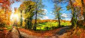 Gorgeous Panoramic Landscape Showing A Meadow And A Path Leading Into A Forest, With Autumn Colors,  poster