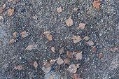 Autumn Leafs On Frozen Ground