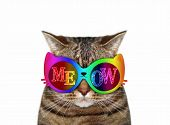 The Cat Wears Color Sunglasses With The Inscription  Meow . White Background. Isolated. poster