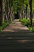 Old romantic bridge into the forest