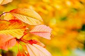 autumn season orange leafs background in nature