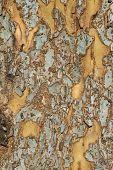 Patchy Tree Bark