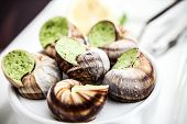picture of escargot  - Escargots with garlic butter and lemon - JPG