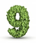 Number 9 from green leaves