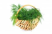 Young green dill in a small wicker basket isolated