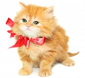 Red kitten with  bow on a white background