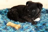 Cute puppy lying with bone on rug