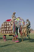 Mahout Riding A Decorated Elephant In Jaipur, India