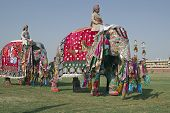 Parade Of Decorated Elephants