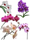 Orchids flowers isolated collection