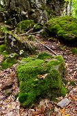 Moss-grown Boulders In Caucasus Mountains