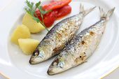 stock photo of plate fish food  - sardinhas assadas - JPG