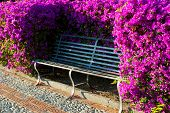 Bench In The Flowering Park