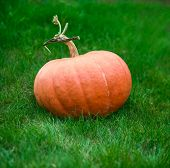 Orange Pumpkin On Grass