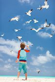 stock photo of flock seagulls  - Little boy and a flock of seagulls at beach - JPG