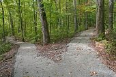 stock photo of paving  - Two paved paths diverge in the woods - JPG