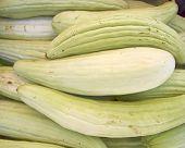 picture of muskmelon  - fresh green muskmelons close up - JPG