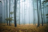 Autumn in a cold forest with fog