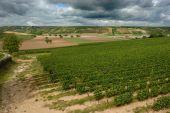 Vineyard Near Sancerre France