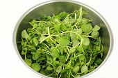 Watercress In A Stainless Steel Bowl