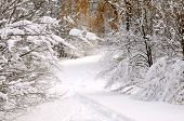 Path in winter forest after a snowfall