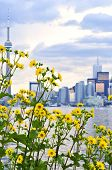picture of urbanisation  - Toronto city waterfront skyline with yellow flowers in foreground - JPG
