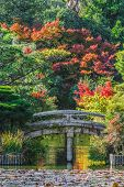 The Garden of Ryoanji Temple in Kyoto
