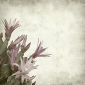 stock photo of schlumbergera  - textured old paper background with Christmas cactus - JPG
