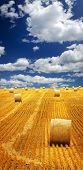 Agricultural landscape of hay bales in a golden field
