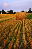 Farm field with hay bales at dusk