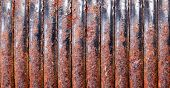 Old Rusty Spring