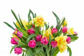 bunch  of pink tulips and yellow daffodils