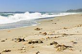 stock photo of pacific rim  - Long Beach in Pacific Rim National park - JPG