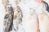 fresh fish on ice inthe market