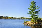 Tree and fall forest on rocky shore at Lake of Two Rivers, Algonquin Park, Ontario, Canada