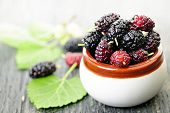 Ripe mulberry berries in a bowl, freshly picked