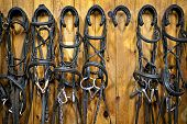 picture of bridle  - Leather horse bridles and bits hanging on wall of stable with one missing - JPG