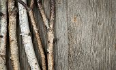 Birch tree trunks and branches on natural wood background