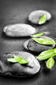 Black and white zen stones submerged in water with color accented green leaves