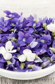 Foraged edible purple and white violet flowers in bowl closeup