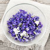 Foraged edible purple and white violet flowers in bowl from above, square format